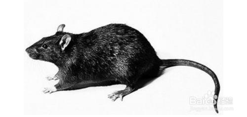 珠海白蚁防治机构及工业分享鼠类防控知识