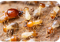 珠海专业白蚁防治公司告知你防治药水喷洒后,对人体有毒吗